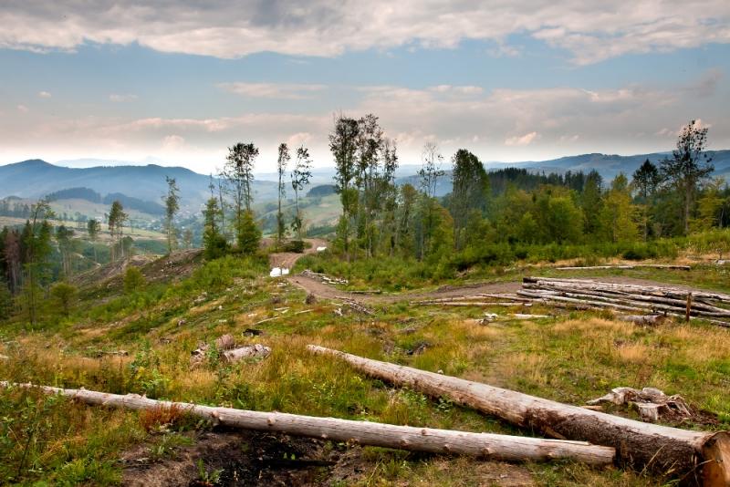 Спроби зупинити лісозаготівлю на Закарпатті неминуче викликатимуть спротив місцевого населення, - Москаль - Цензор.НЕТ 4198