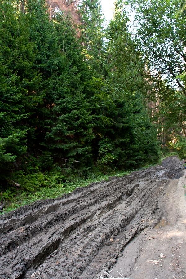Спроби зупинити лісозаготівлю на Закарпатті неминуче викликатимуть спротив місцевого населення, - Москаль - Цензор.НЕТ 6157