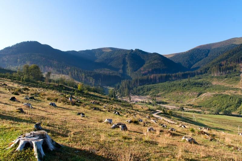 Спроби зупинити лісозаготівлю на Закарпатті неминуче викликатимуть спротив місцевого населення, - Москаль - Цензор.НЕТ 5279