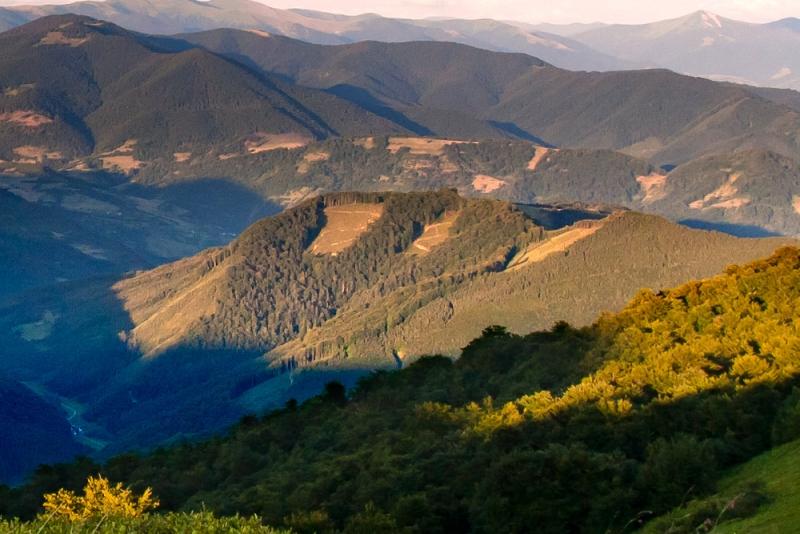 Спроби зупинити лісозаготівлю на Закарпатті неминуче викликатимуть спротив місцевого населення, - Москаль - Цензор.НЕТ 3293