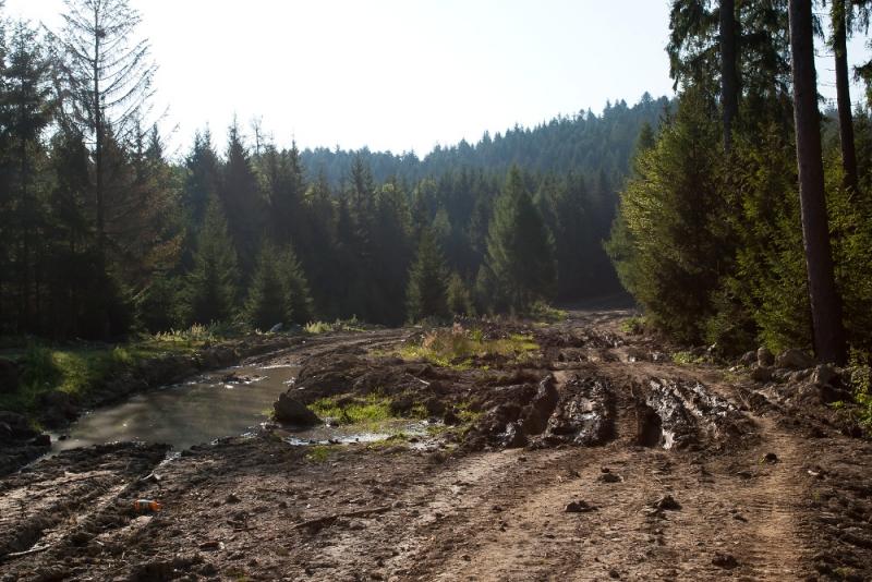 Спроби зупинити лісозаготівлю на Закарпатті неминуче викликатимуть спротив місцевого населення, - Москаль - Цензор.НЕТ 1666